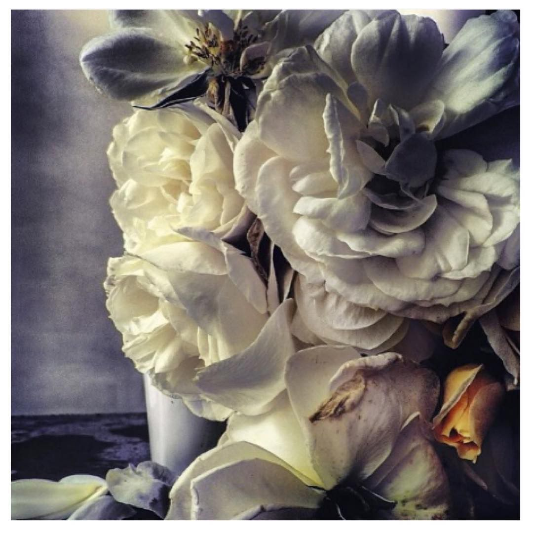 Beauty ‪photography‬ ‪nickknight‬. Loved barbarabaumel.