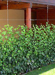 pergola mit sichtschutz aus efeu garten pinterest efeu pergola und sichtschutz. Black Bedroom Furniture Sets. Home Design Ideas
