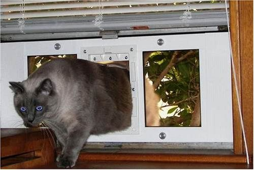 The Springs Make It Easy To Install In Any Double Hung Window That Is 23 28 Wide Flap Will Allowa Pet