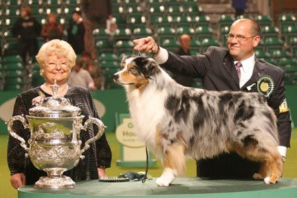 Crufts Best In Show 2006 Caitland Isle Take A Chance