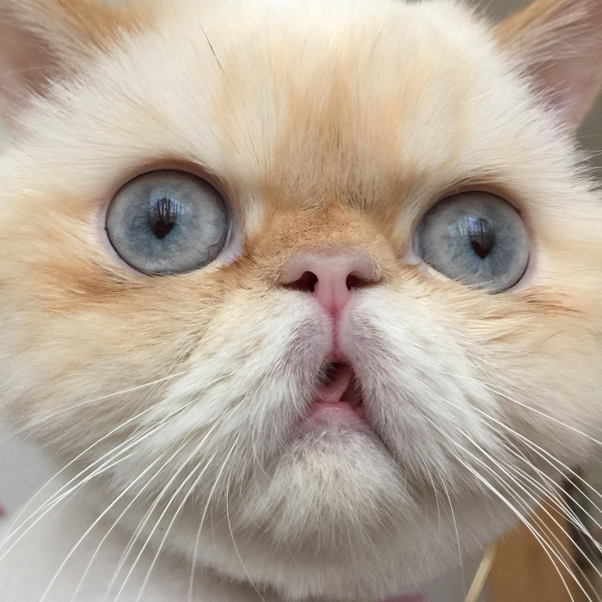 Cute Derpy Cats