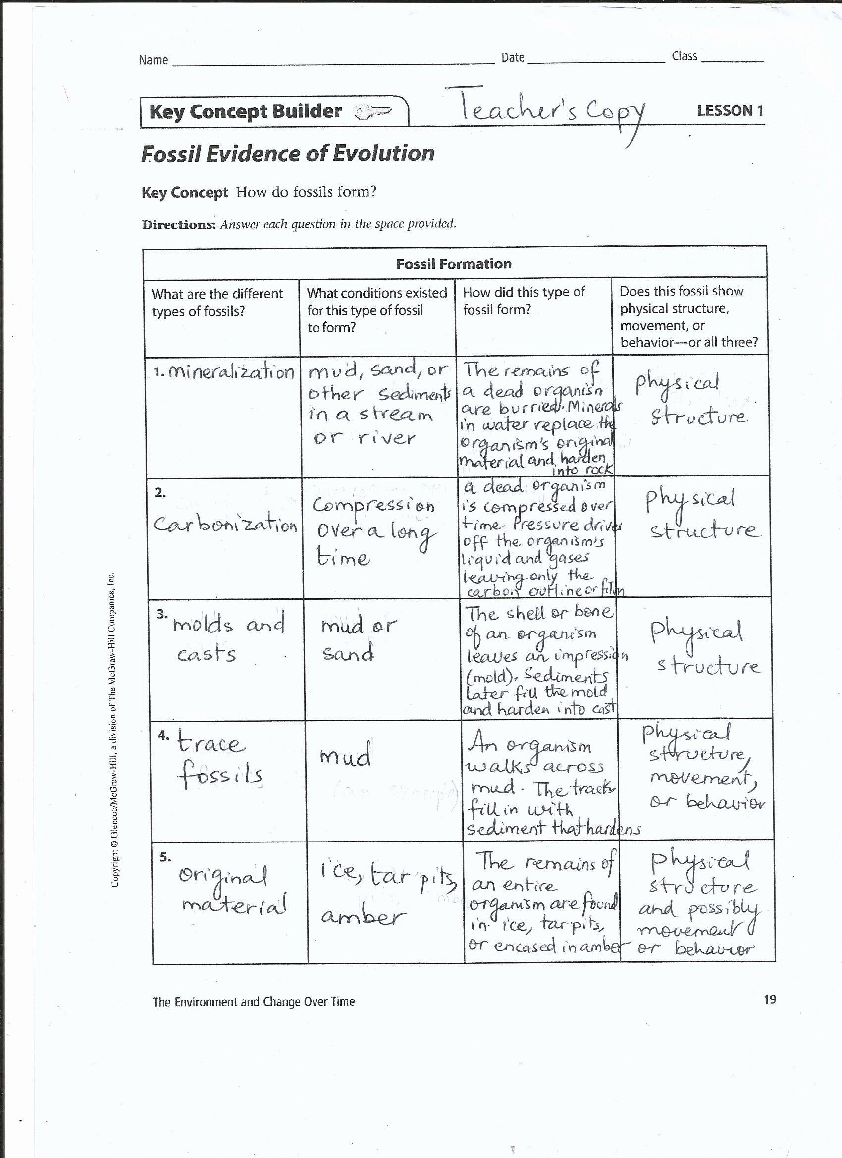 50 Evidence Of Evolution Worksheet In