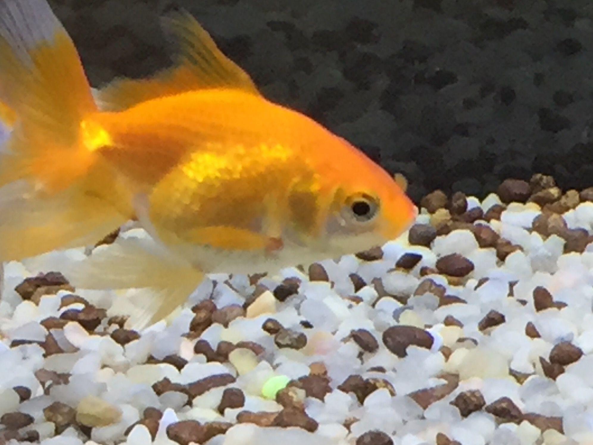 Orange juice my cute fish
