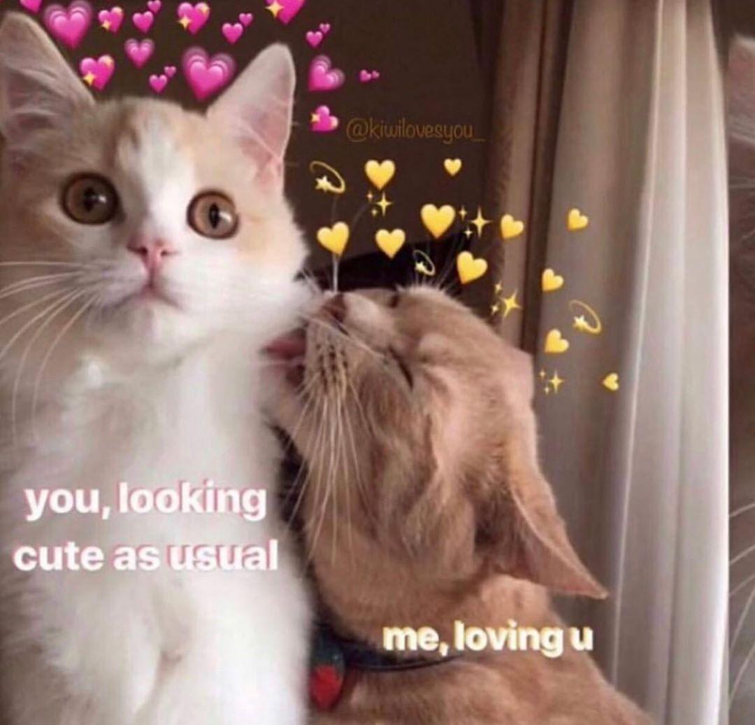 T Kiwilovesyou Cute Love Memes Cute Cat Memes Cat Memes