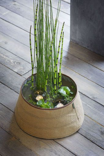 Le mini jardin aquatique conçu dans un bac en zinc Mini Bassin - petit jardin japonais interieur