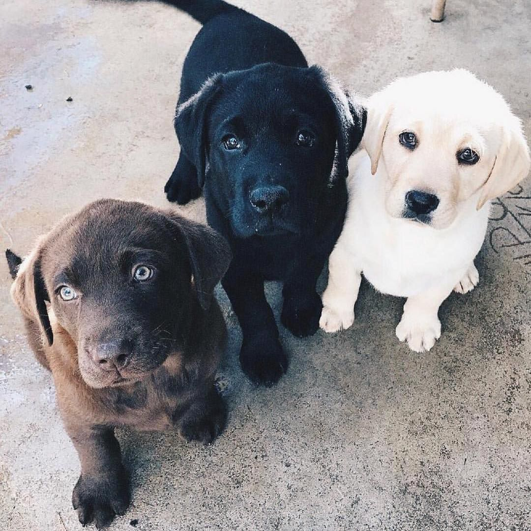 Squad Goals Thecheekybean Cute Animals Puppies Cute Dogs