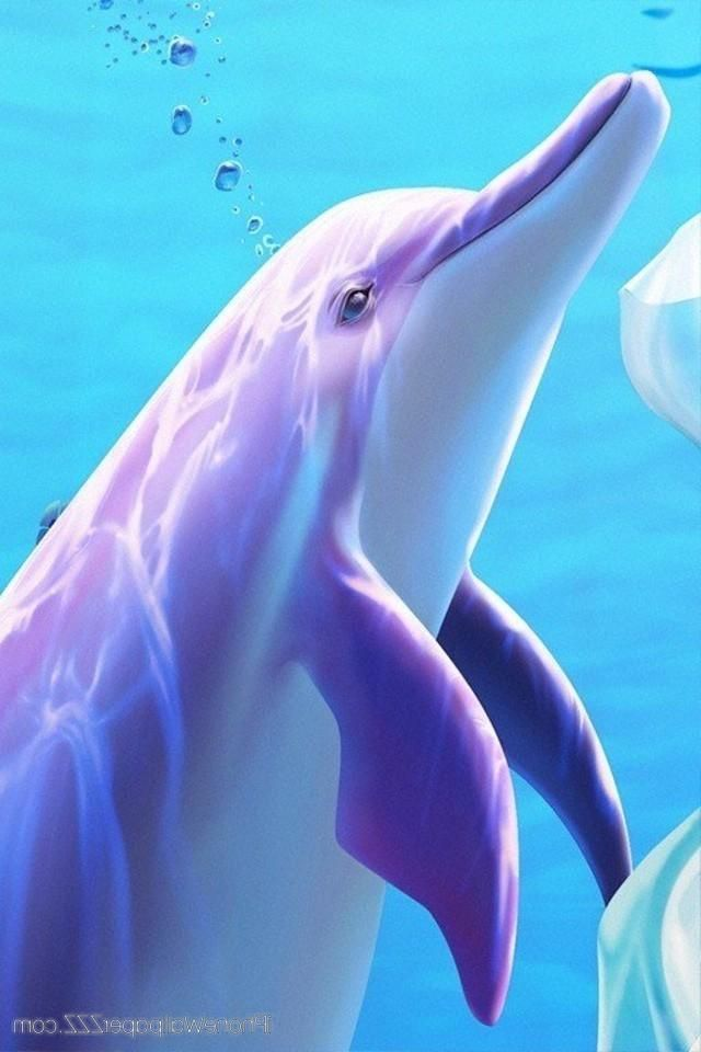 DOLPHIN, IPHONE WALLPAPER BACKGROUND Iphone wallpaper