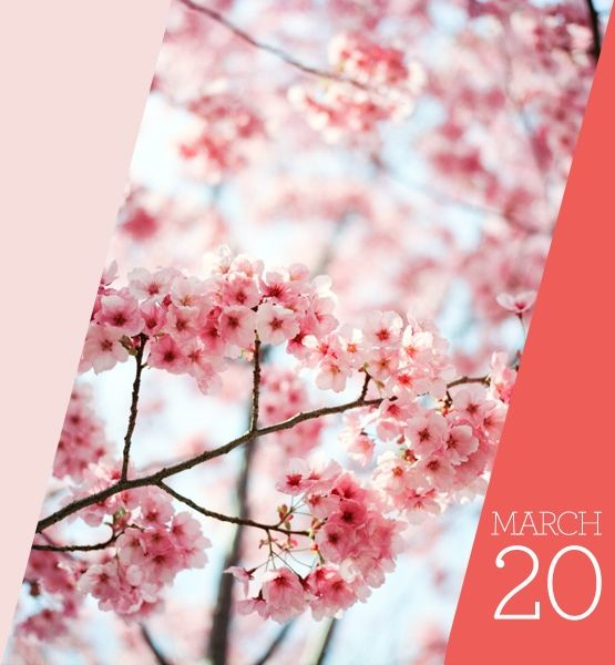 Save The Date 15 Things To Do This Month Blossom Trees Cherry Blossom Tree Cherry Blossom