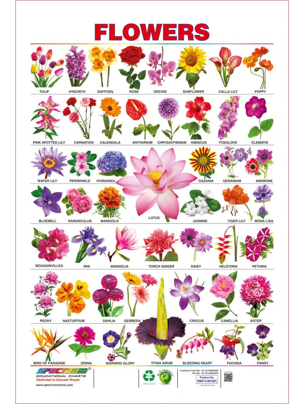 Pin By Joanna Karczewska On Design Resources Elements Pretty Flower Names Flower Images With Name Flowers Name List