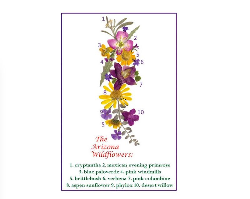 These carefully rendered arrangements from Wild Greeting Cards bring wildflowers from around the world to colorful life, complete with details of each flower selected.