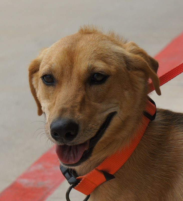 dogs currently available - Shelter Dogs of Oklahoma