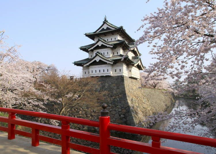 Pin By Myrah On The Kiji In 2021 Cherry Blossom Japan Japan Cherry Blossom Festival Cherry Blossom Festival