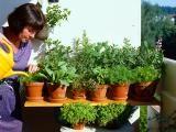 Balkon bepflanzen: Kräuter