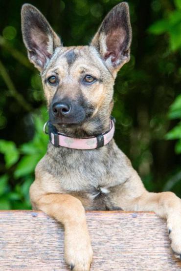 Hund Mischling Mischling Hundin 6 Monate In Heilbronn Baden Wurttemberg Haustiere Hunde Tiere