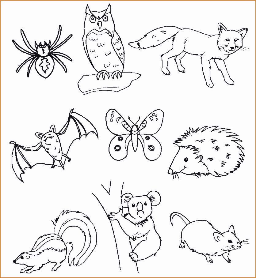Disegni Di Animali Da Stampare E Colorare Gratis 14 Disegni Animali Del Bosco Da Colorare E Stampare Animali Del Bosco Disegno Di Animali Animali