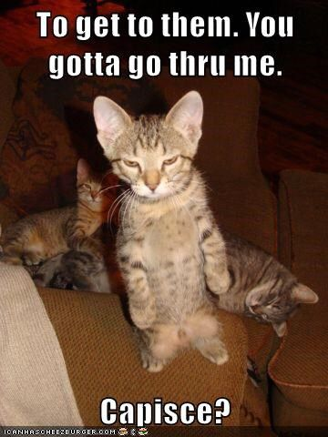 Lolcats Is The Best Place To Find And Submit Funny Cat Memes Other Silly Materials Share With World We Cats That Make You Lol
