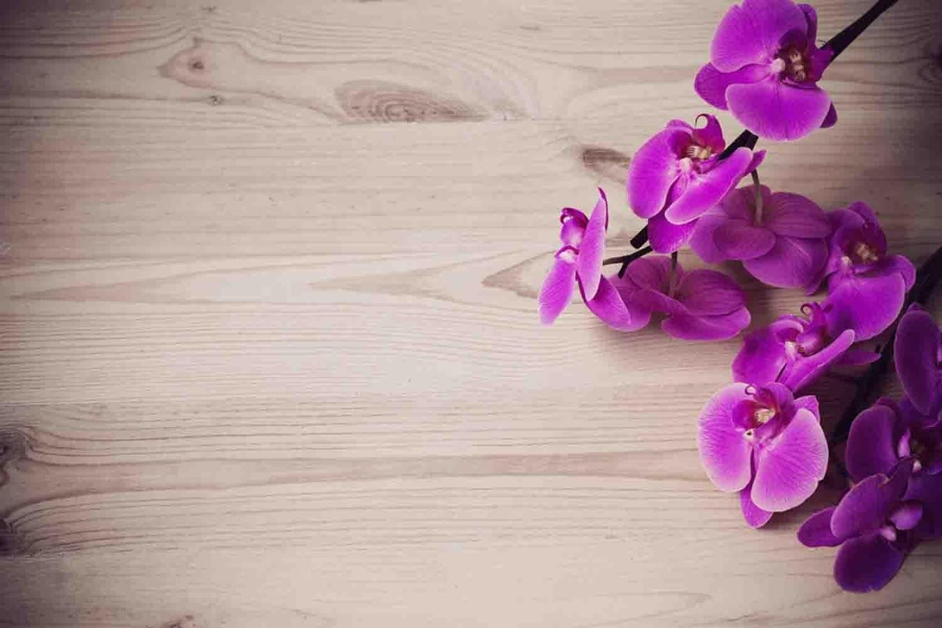orchid wallpapers wallpaper hd wallpapers pinterest