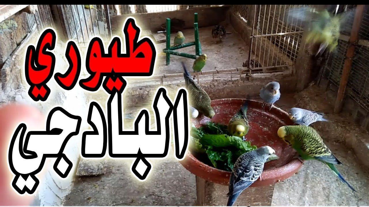 طيور البادجي وحبها الشديد للخس Plants Birds