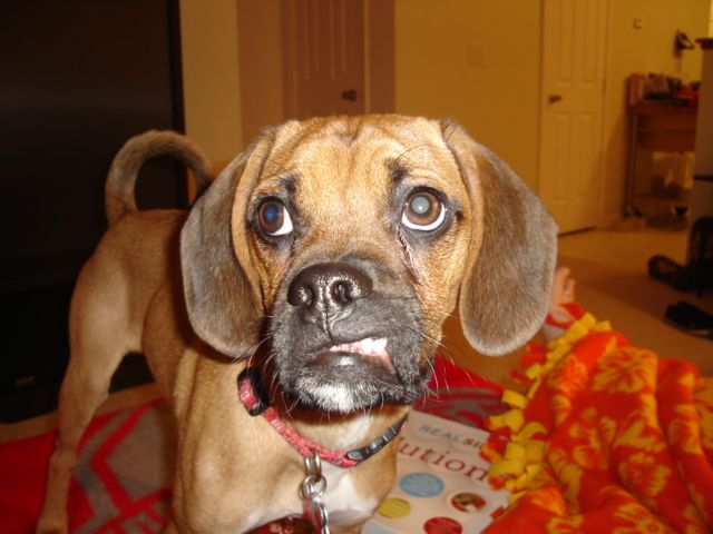Toby Puggle
