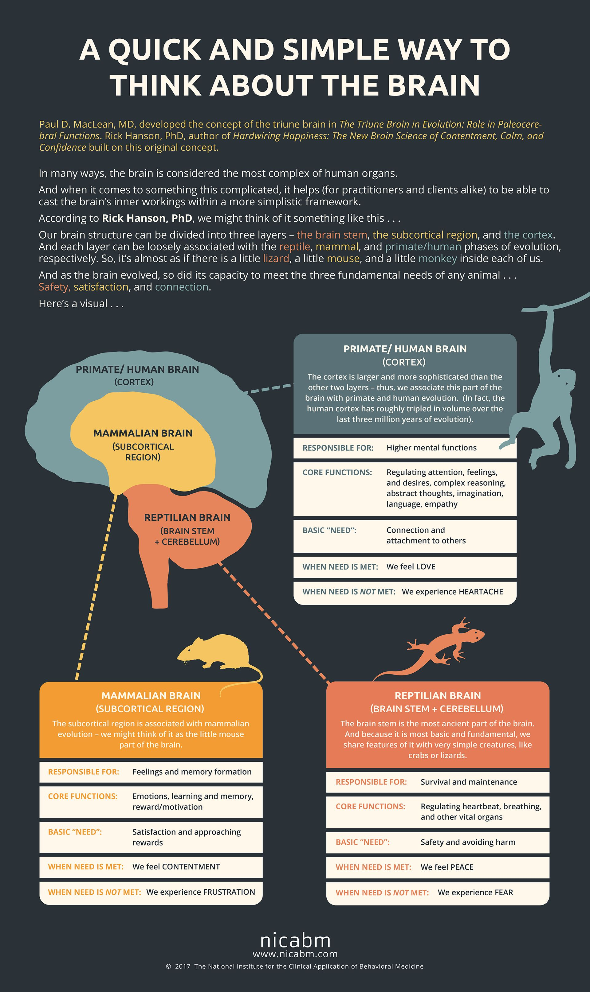 A Quick and Simple Way to Think about the Brain   Brain Basics ...