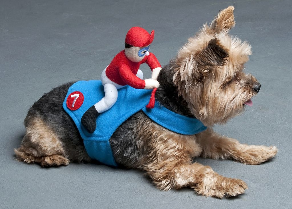 Yorkie Halloween Costumes Google Search Dog Halloween Costumes Pet Costumes Dog Costumes
