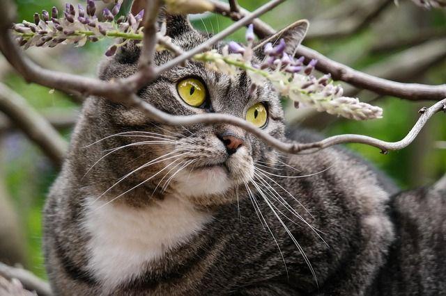 Warum haben wild lebende Katzen keine Allergien? Süßeste