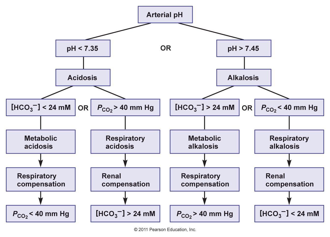 hight resolution of acid base balance evaluation of acid base disturbances diagnosis of acid base
