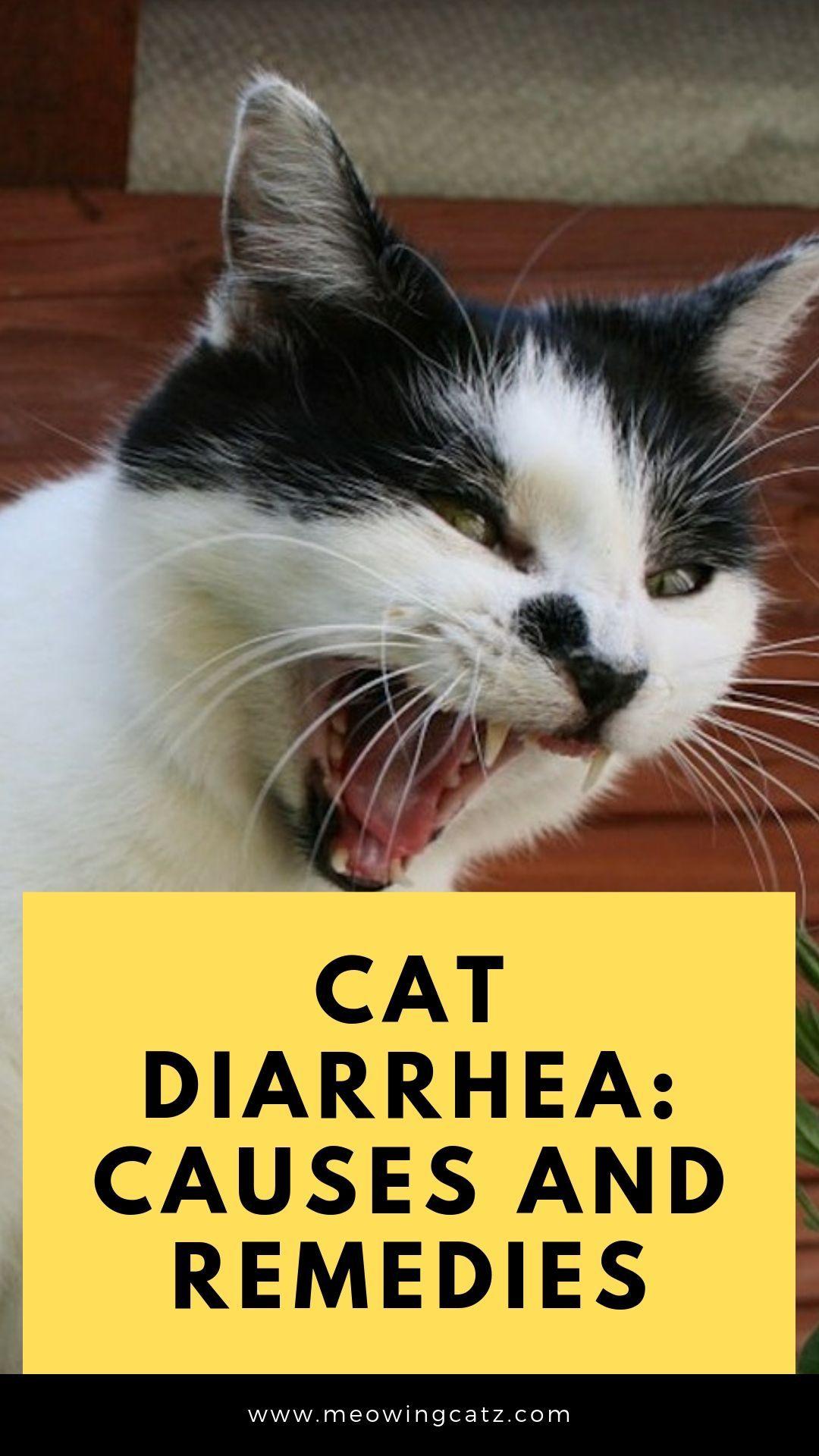 Cat Diarrhea Causes And Remedies Cat Diarrhea Diarrhea Remedies Diarrhea Causes