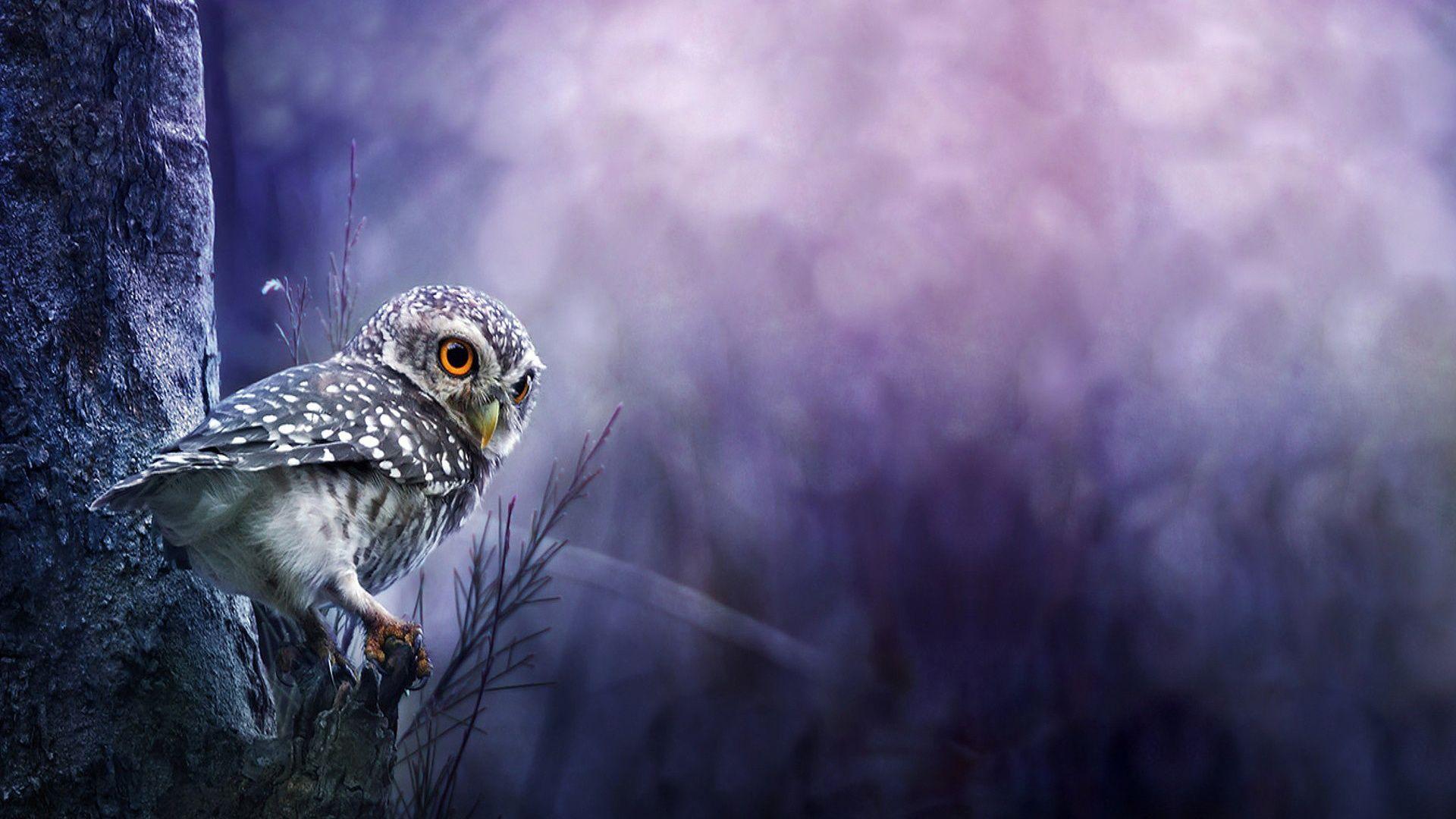 Baby Owl Desktop Wallpapers And Stock Photos Owl Wallpaper Baby Owls Cute Baby Owl