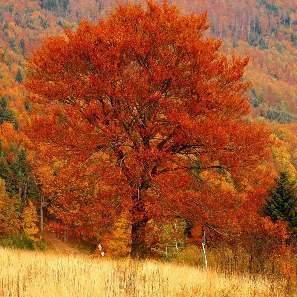 Pin On Autumn1 Autumn grass field mountain forest trees