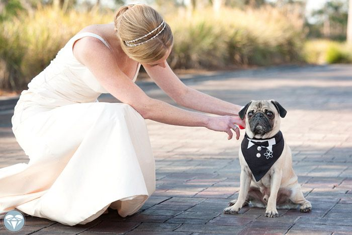 Sara And Taylor S Tpc Sawgrass Wedding Dog Wedding Pugs Wedding