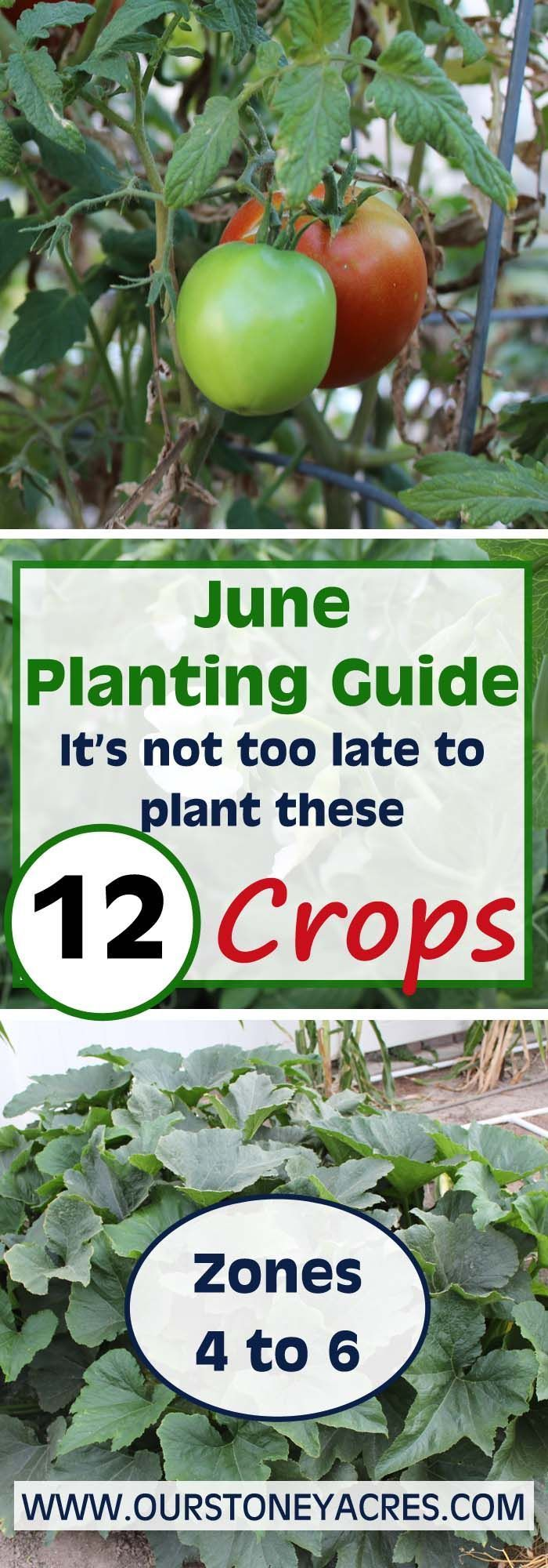 June Planting Guide It S Not Too Late To Plant Planting