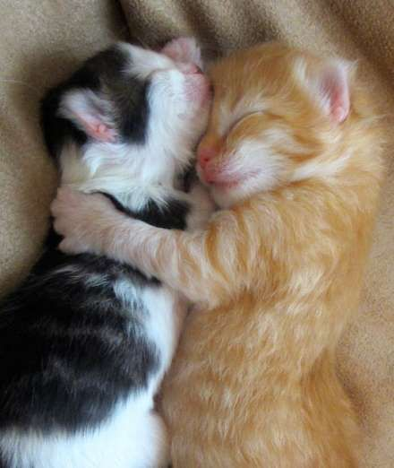 20 heartwarming pictures of hugging kittens