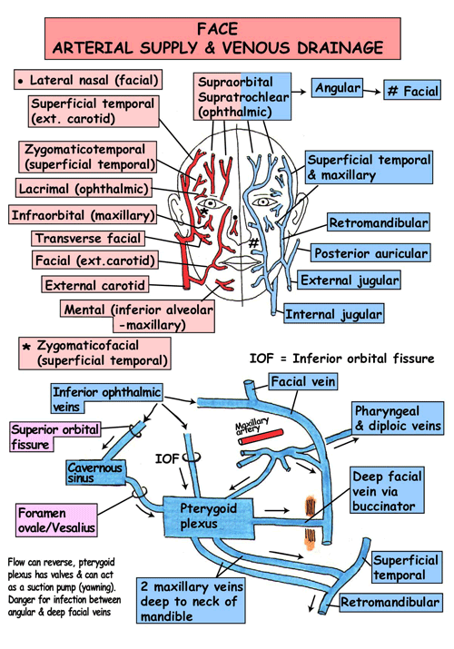 Instant Anatomy - Head and Neck - Vessels - Arteries - Face | nerve ...
