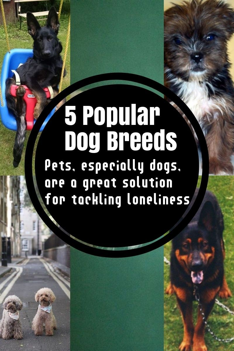 5 Dog Breeds That Are Widely Renowned Around The Globe Dog Breeds Popular Dog Breeds What Kind Of Dog