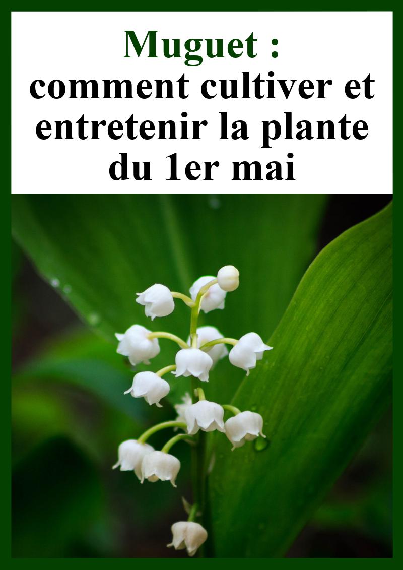 Comment Planter Du Muguet oh les belles clochettes ! | cultiver, jardinage en pots et