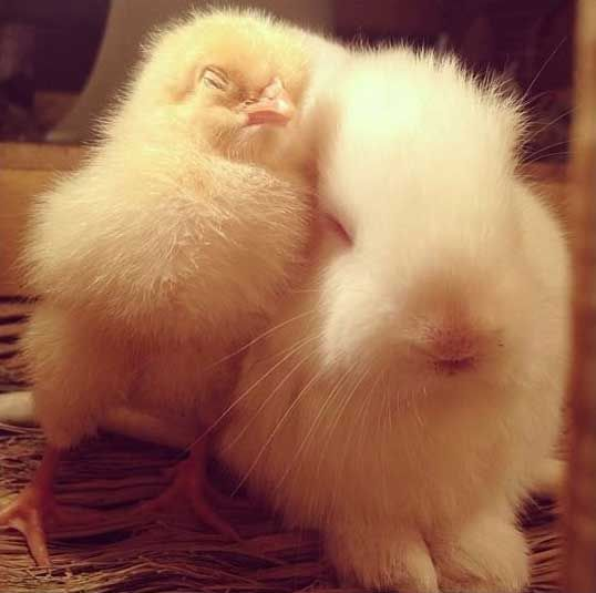 They're so fluffy…