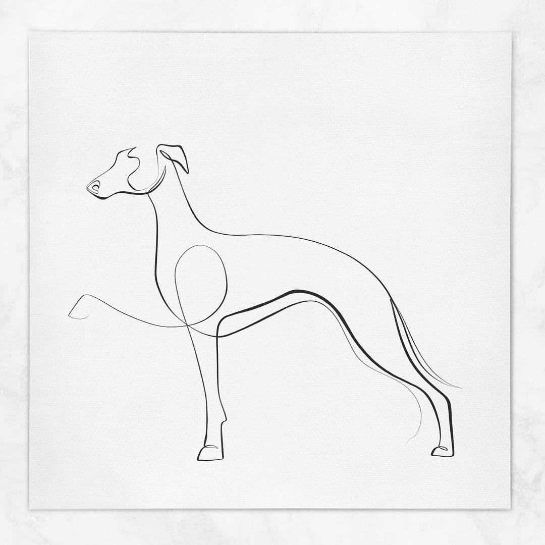Dane Khy V Instagram The Italian Greyhound Withoneline