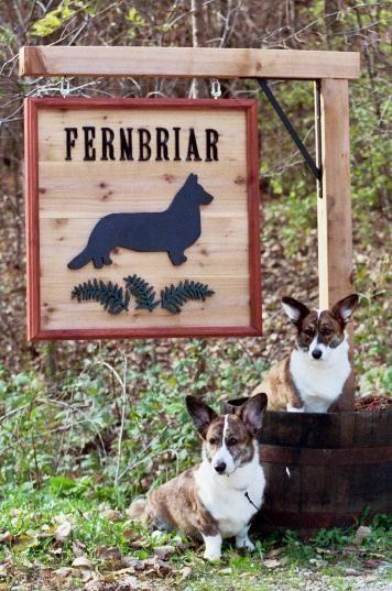 Fernbriar Cardigan Welsh in MN breeders