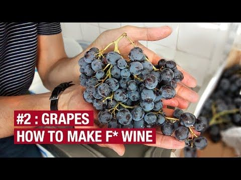 Bought 10Kg of Grapes. Now What ? How To Make F* Wine At Home - YouTube