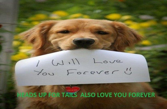 Heads Up For Tails Is India S No 1 Web Site For Dog Lovers Share It With Your Friends Cute Dogs Cute Puppies Animals Beautiful