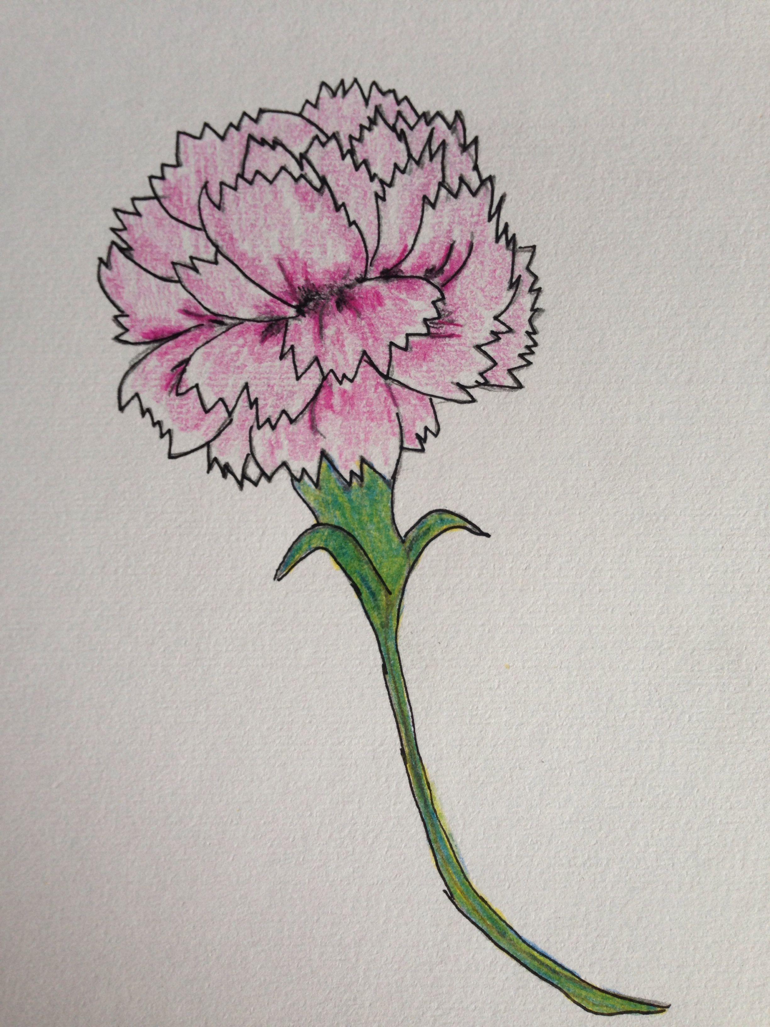 My Carnation - 8/31/14