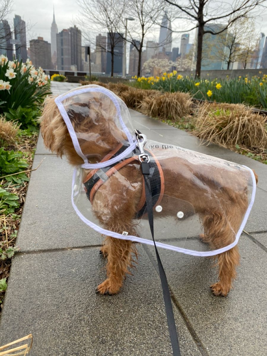 #dogs#dogsofinstagram#yorkiesofinstagram#puppy#cute#adorable#yorkie#weeklyfluff#buzzfeedanimals#cutedog#dog#WHPpetproject#petsofinstagram#dogmodel#cutepetclub#cutestdogever#bestwoof#dailyfluff#dogsofla#barkpost#teampixel#puppies#dogfriends#animalsoninstagram #puppiesofinstagram#smallbreed#tinydog#maleyorkie#aww#pets#dogsclothes