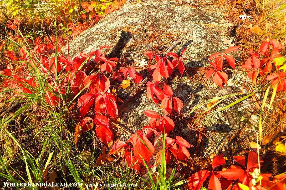 Fall Leaves on Boulder, Voyageurs National Park. The fall color was ...