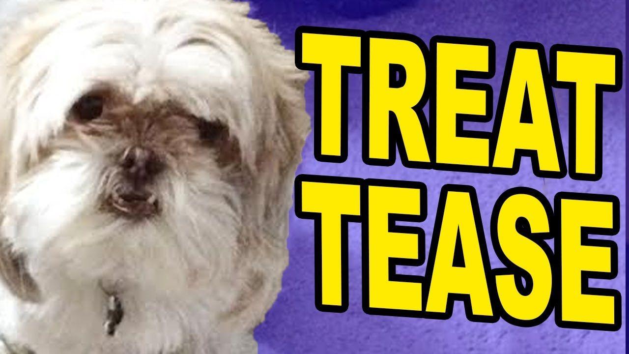 DOG TREAT PRANK Dog treats, Dogs, Pranks