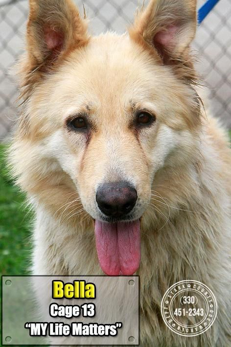 Adopt 13 Bella Adopted On Safe Rescued Or Adopted Animals Dogs Adoption Shelter Dogs
