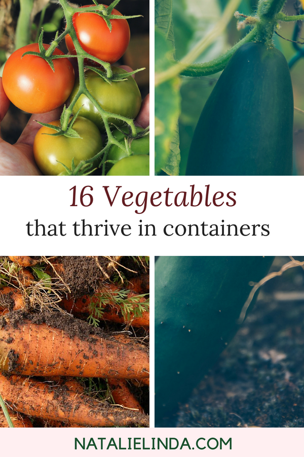 Photo of 16 Vegetables That Grow In Containers – Natalie Linda