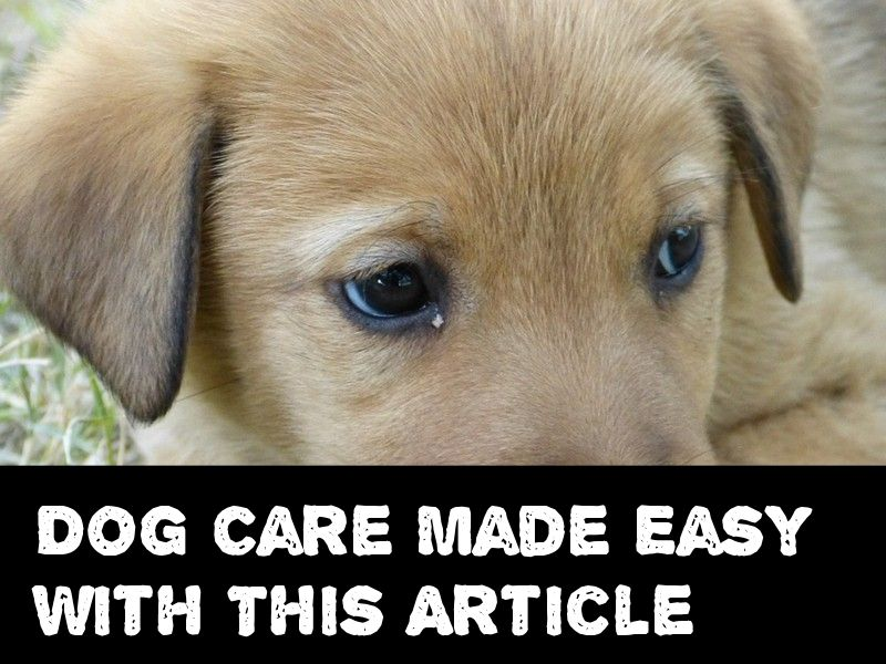 Tips On Dog Care That Will Help Dog Training Dog Care Easiest