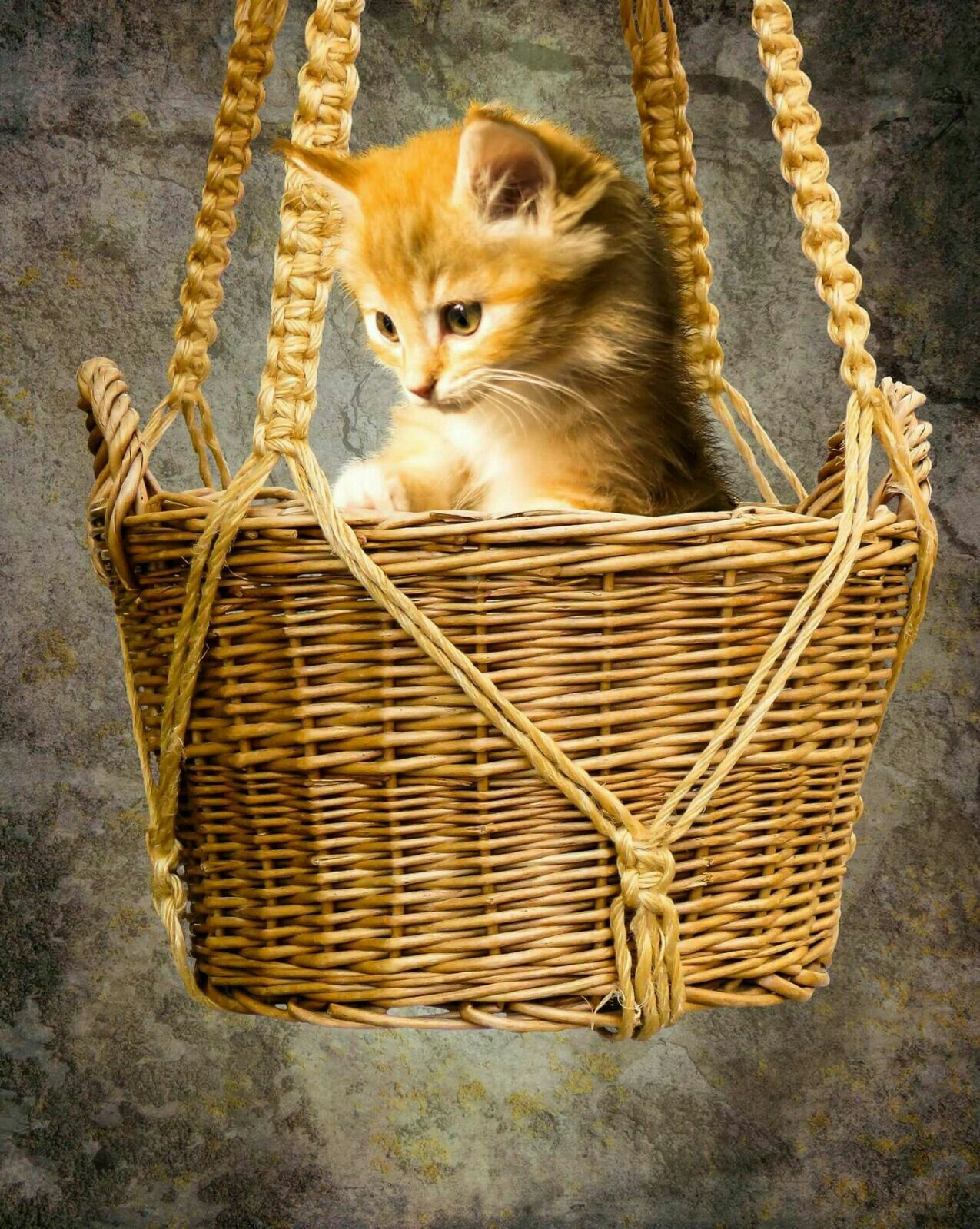 Pin by Judy Magar on kitty cats Cat breeds, Cat watch