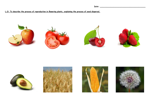 Reproduction In Plants And Animals Planning And Worksheets